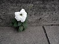 sidewalk-flower.jpg