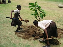 Tree planting by Students- wonderofcreation.jpg