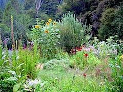 Permaculture Garden.jpg