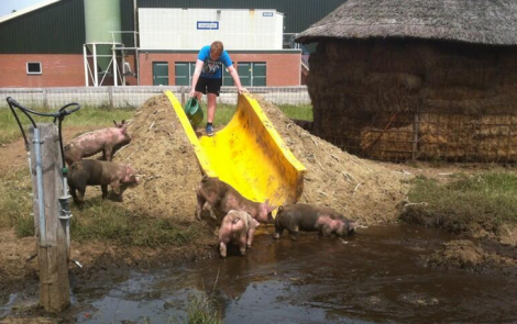 pig-mudslide