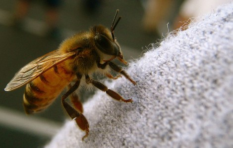 confsued-bee